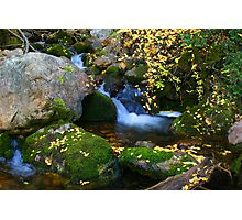 Autumn on the Moss Photographic Print