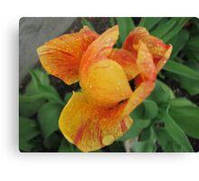Tulip and Raindrops Canvas Print