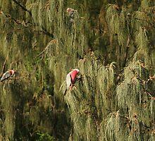 Hidden in the Trees by Sherrianne Talon