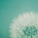 Aqua Dandelion by Nicola  Pearson
