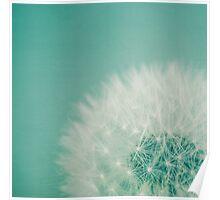 Aqua Dandelion Poster