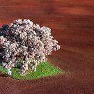 Jacaranda tree, Benalla, Victoria by Roz McQuillan