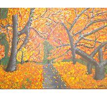 Auburn Path Photographic Print