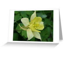 Lemon Aquilegia Greeting Card