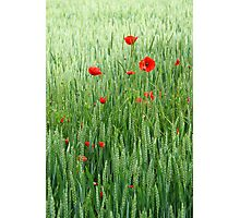 peaceful field Photographic Print