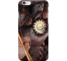 A Walk in the Woods #4 iPhone Case/Skin