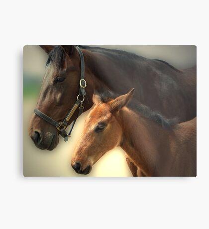 Yankee Taboo and Foal Metal Print