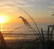 Misty morning sunrise by nauticalelf