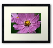 Delicate Pedals Framed Print