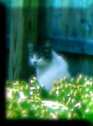 FIFI, THE SNEAKY CAT by Sally Omar