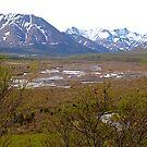 Denali National Park, Wetlands #3, Alaska, 2012. by johnrf