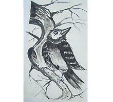 inky bird Photographic Print