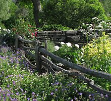 Robison Herb Garden by Betty Mackey