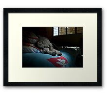 Fluffy_2 Framed Print