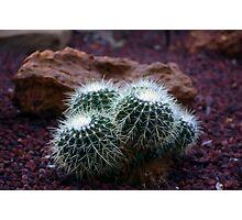 Desert Cactus Photographic Print