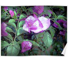Unique purple flower Poster