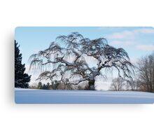 Scraggly Tree - Winter Canvas Print