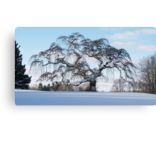 Scraggly Tree - Winter Canvas Print