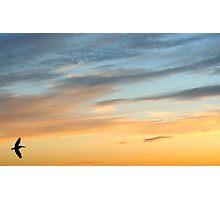 Sunset Hunt Photographic Print