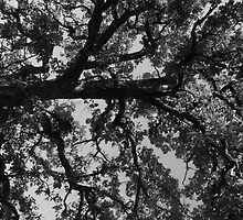 Untitled Tree in grey by Sammi Babcock
