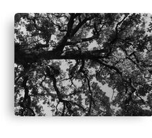 Untitled Tree in grey Canvas Print