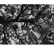 Untitled Tree in grey Photographic Print