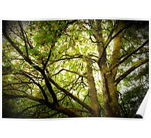Sunlit Tree Canopy Poster