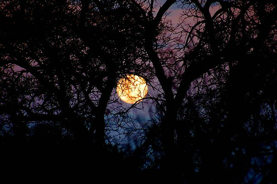 FULL MOON IN AFRICAN SILHOUETTE by Magaret Meintjes