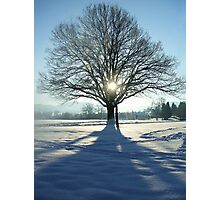 coronation tree Photographic Print
