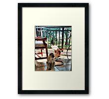 House Guest? Framed Print