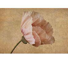 Parchment Photographic Print