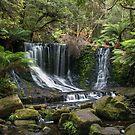 Horseshoe Falls Palms - Tasmania by Paul Campbell  Photography