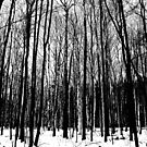 Black And White Forest by Debbie Oppermann