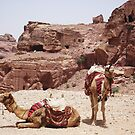 Pair of Camels by Marmadas