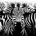 zebre by Cliff Vestergaard
