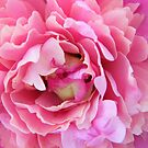 peony by stopthat