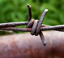 Barbed wire by stopthat