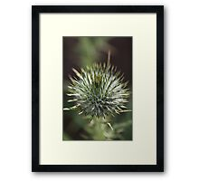 Round Green Thistle Bud Framed Print