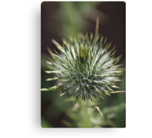 Round Green Thistle Bud Canvas Print