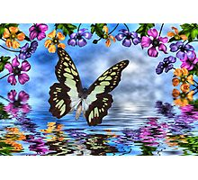 Butterfly and anemones Photographic Print