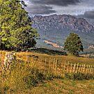 Mt Roland: Tasmania by Colin  Ewington
