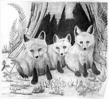 Fox Kits - Charcoal Poster