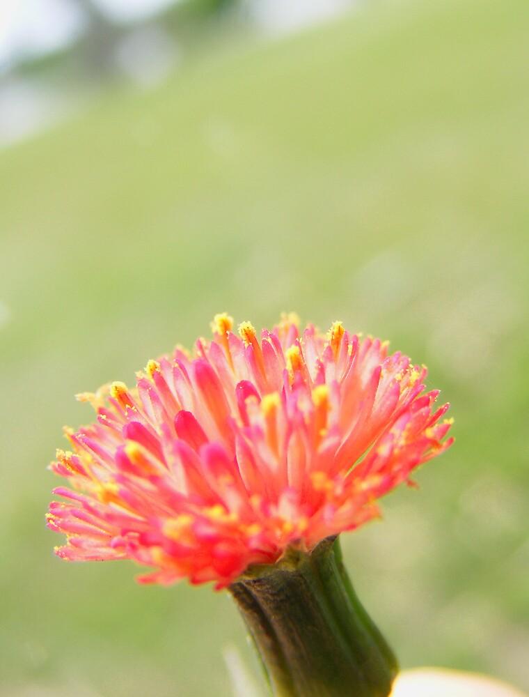 Flower Power by Jeff  Ryan