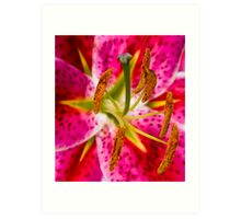 Lily Pistil and Stamens Art Print
