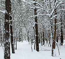 Pretty In White by Debbie Oppermann