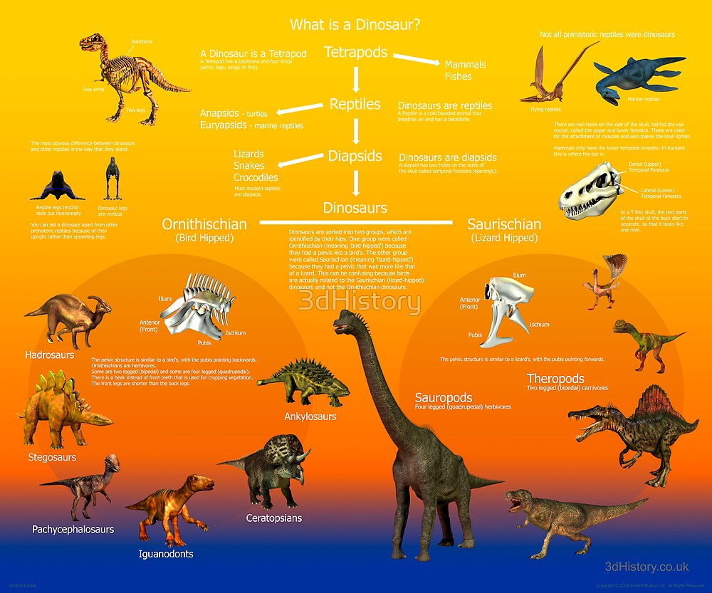 What is a Dinosaur? by 3dHistory