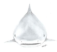 Great White Shark by AtlasArts