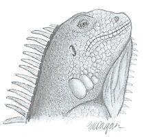 Iguana Lizard by AtlasArts