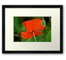 Just as beautiful from behind... Framed Print