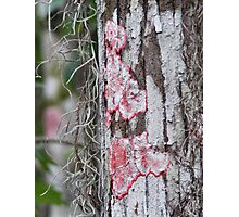 red moss Photographic Print